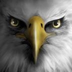 老鹰模拟飞行