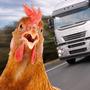 母鸡过马路