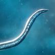 Bionix:孢子的开始 Mod